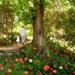 Babylonstoren garden 10