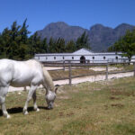 Cape winelands 1
