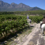 Cape winelands 2