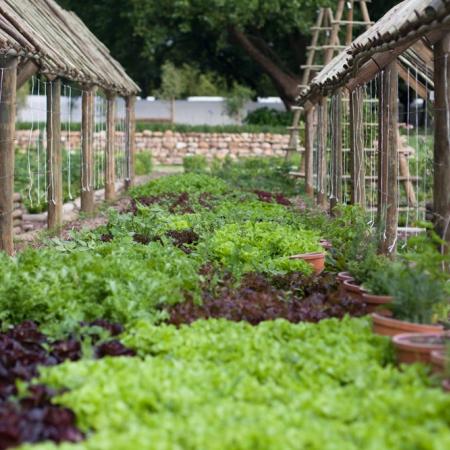 boschendal_werf_vegetable_garden_1000x677_21_450_450_s_c1